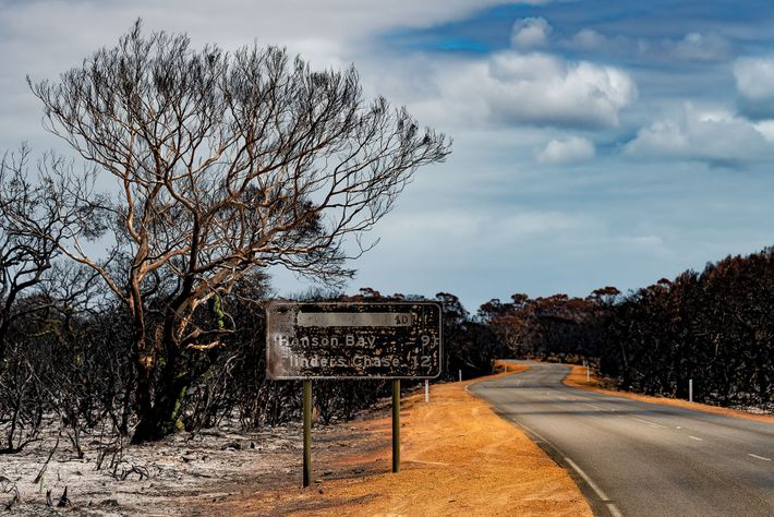The signpost to Flinders Chase was scorched by fire, but it's a rare survivor: the heat ...