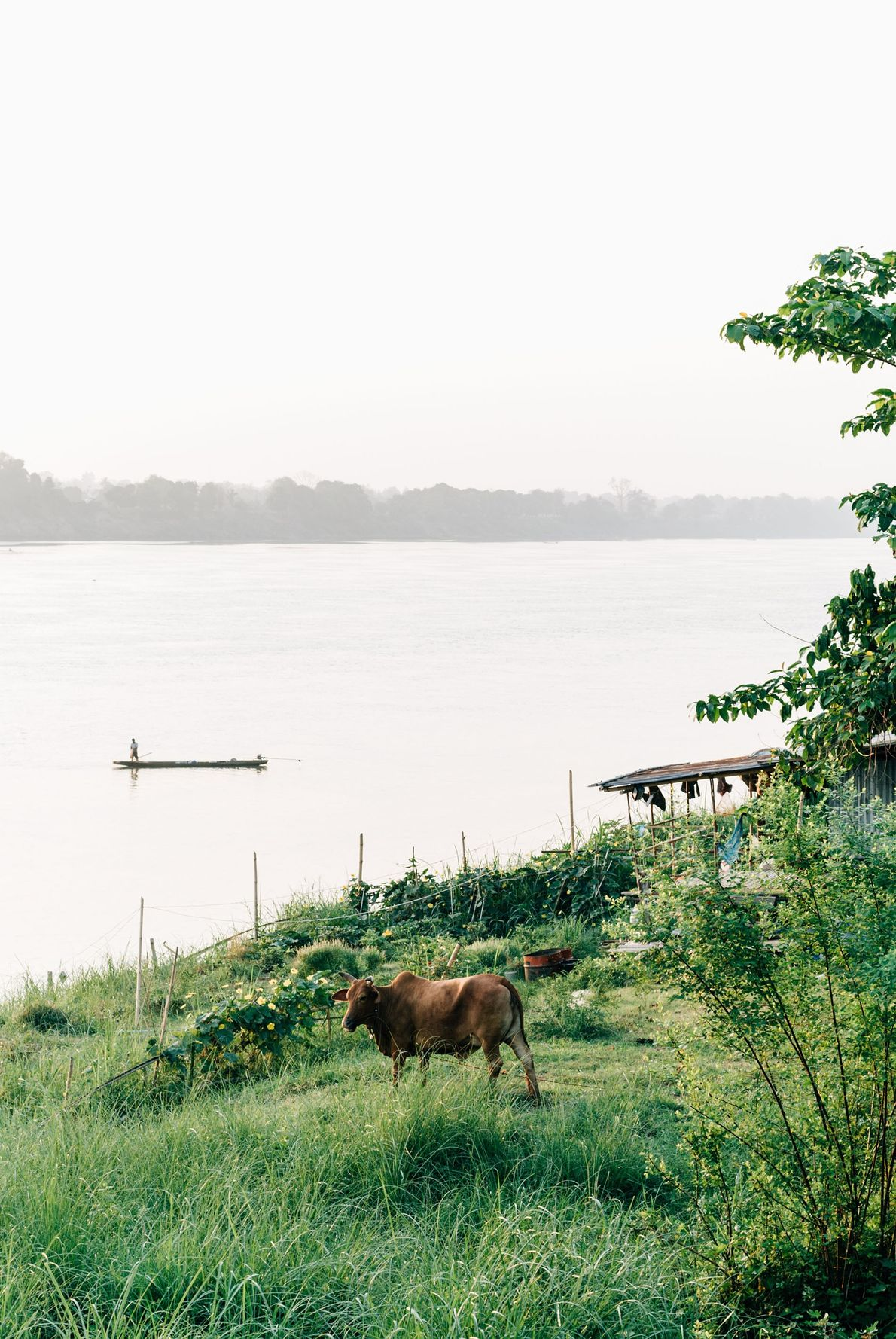 A smallholding on the banks of the Mekong close to Nakhon Phanom