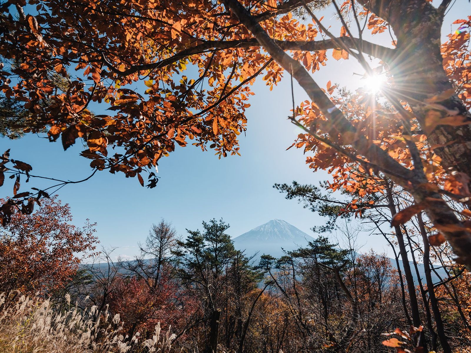 Around 300,000 people climb Fuji every year.