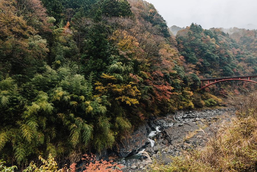 Autumn colours on Mount Shichimen are spectacular, with Japanese maple trees taking on vivid reds.