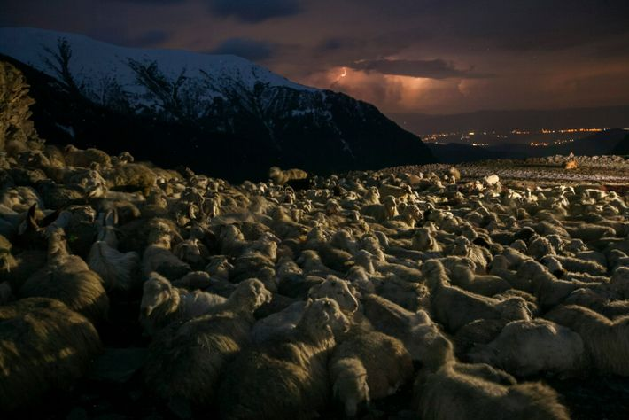 As a flock of sheep waits on the road, a storm brews above Telavi, in the ...