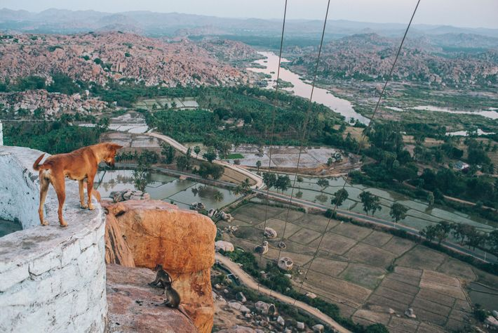 A dog looks down on the ancient village and UNESCO World Heritage Site of Hampi, in ...