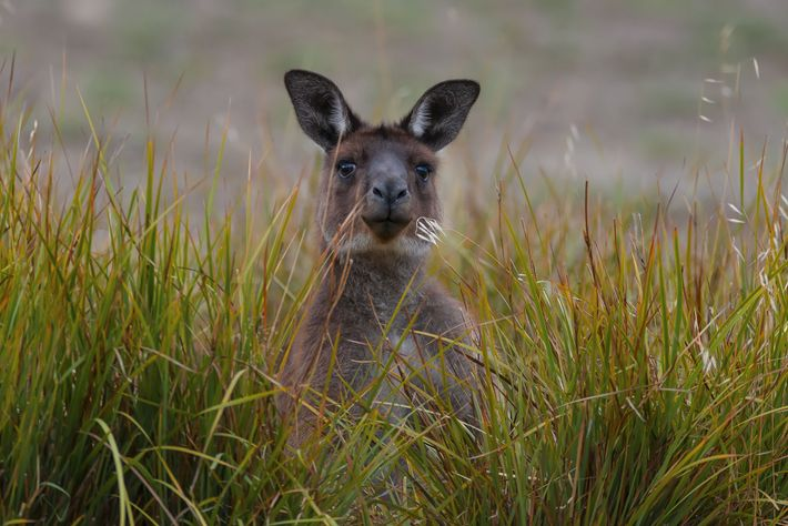 The island was given its name by Matthew Flinders, who visited the island in 1802 and ...