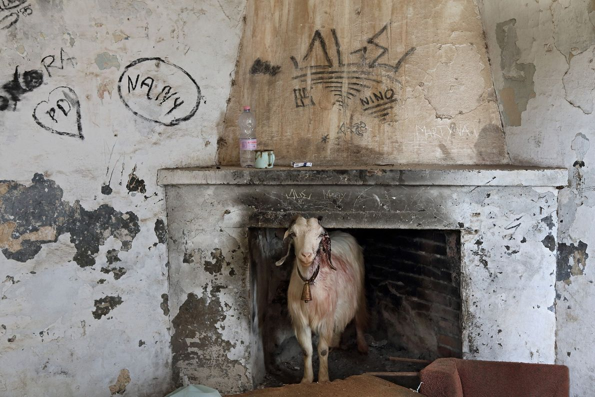Today, local shepherds use the abandoned buildings in Villaggio Asproni to house livestock.