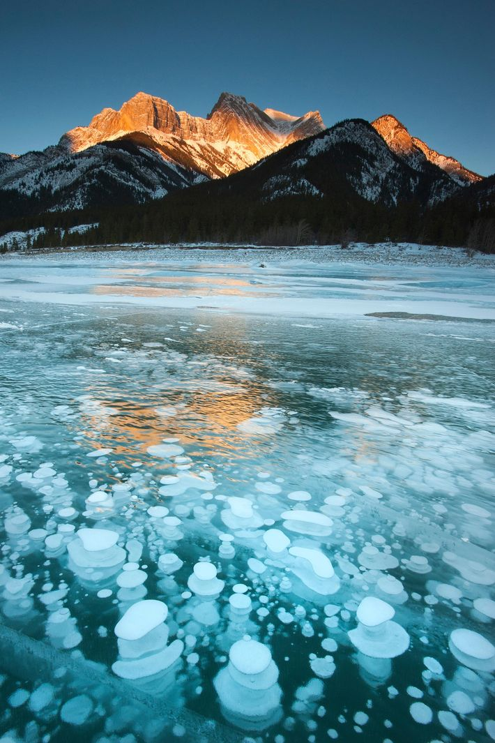 Frozen bubbles form on Abraham Lake.