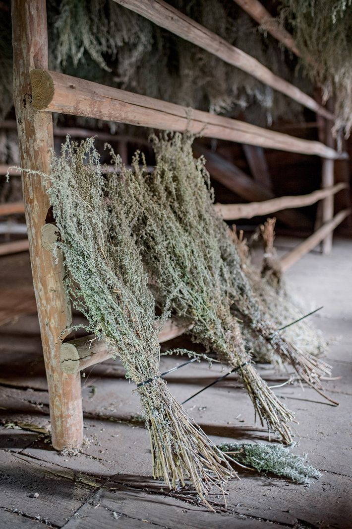Wormwood plucked from an on-site garden dries in the building's attic before being used to make ...