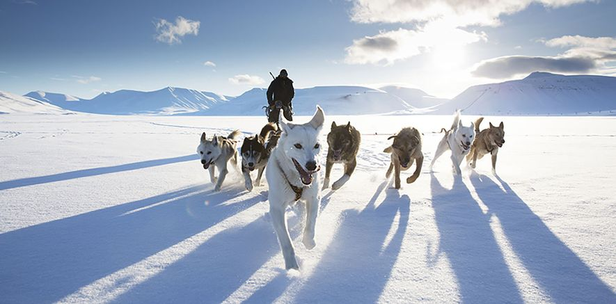 Action category winner: Svalbard, Norway