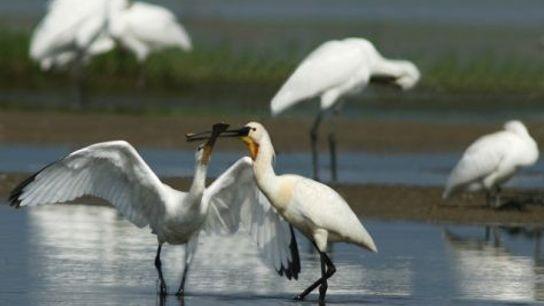 Birdlife at Lake Kerkini