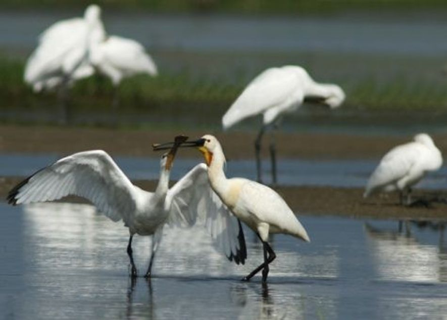 Birdlife at Lake Kerkini