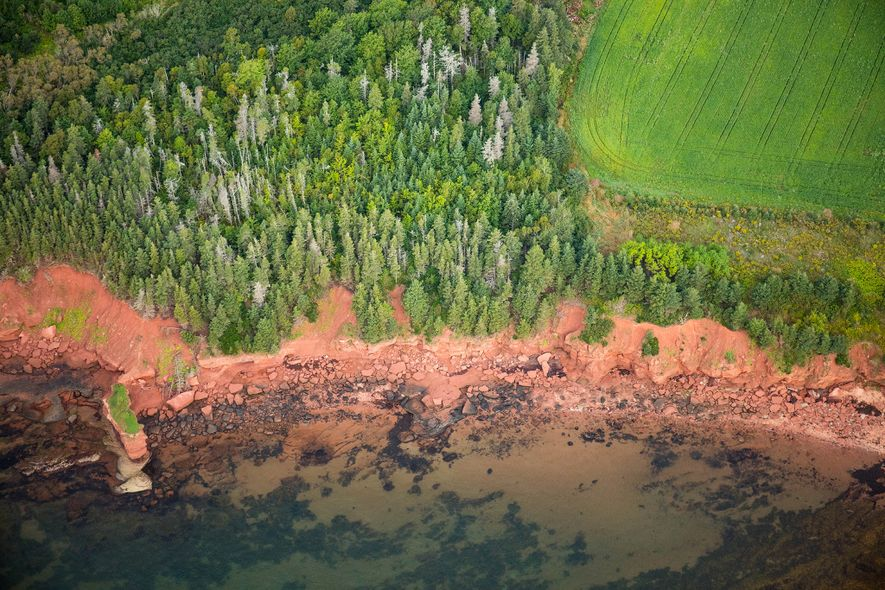 A bright green forest and field contrast the ruddy shores of Prince Edward Island. The red ...