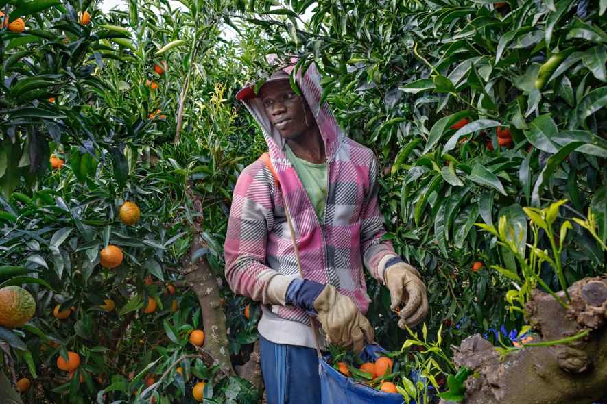 After making his way in 2016 from Senegal to the agricultural belt of southern Spain, Mbaye ...