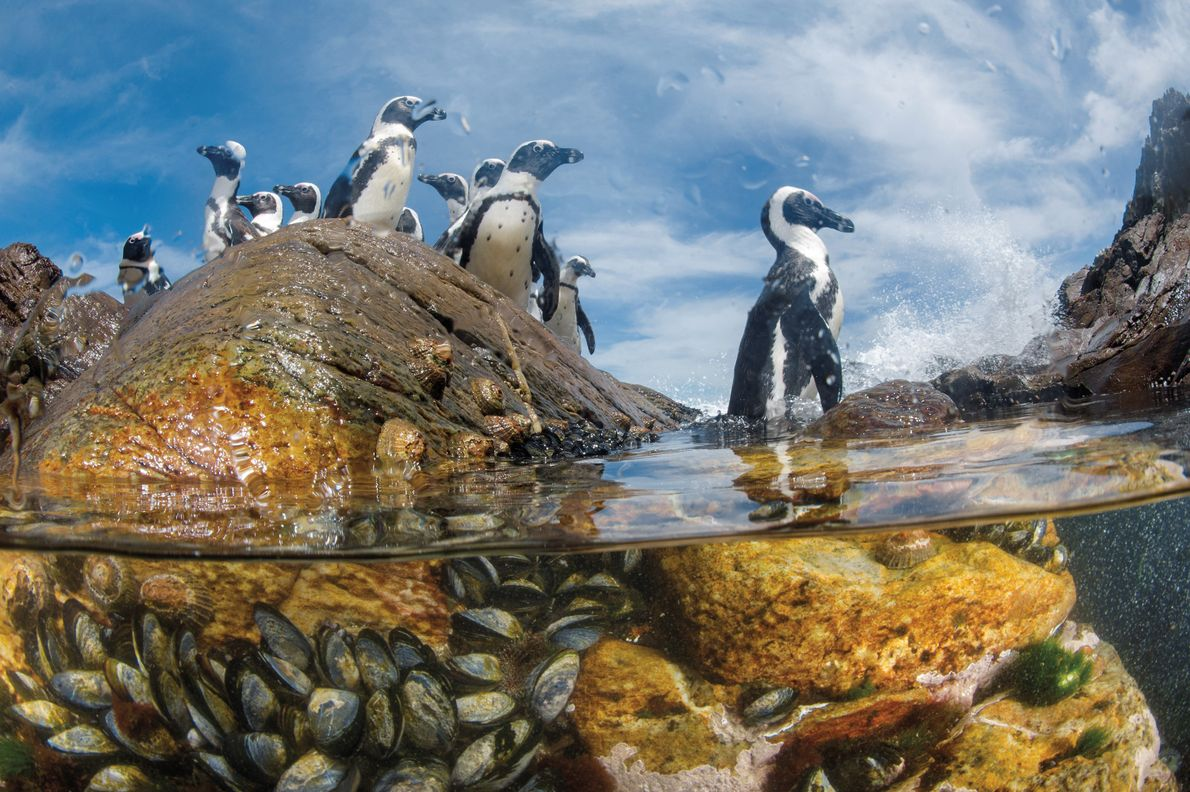 Skeleton Coast, Namibia