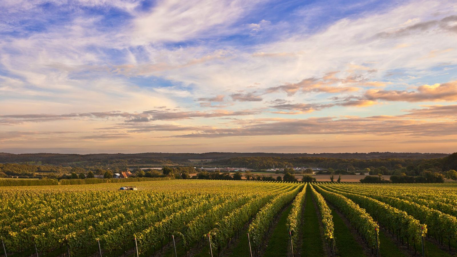 In England, grapes are successfully grown inDevon, Cornwall, Gloucestershire and Leicestershire, but most wine production (61.5%) ...