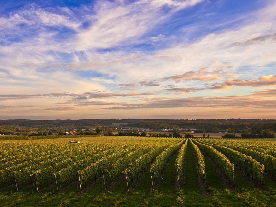 Five world-class English wines to try this summer