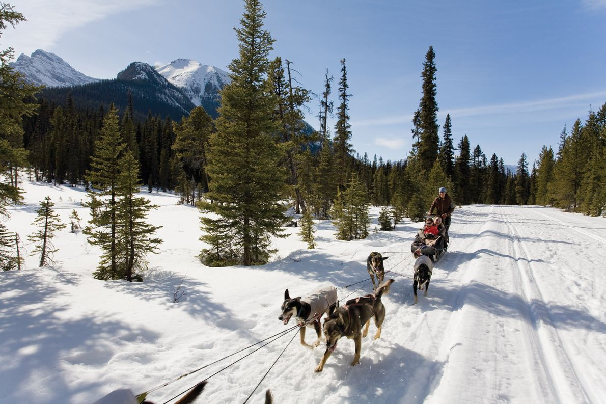 Dogsledding through the incredible scenery of the Canadian Rockies is a unique experience.