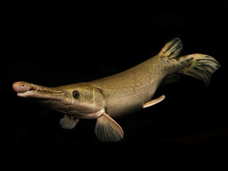 Amazing pictures of some of Earth's largest freshwater creatures