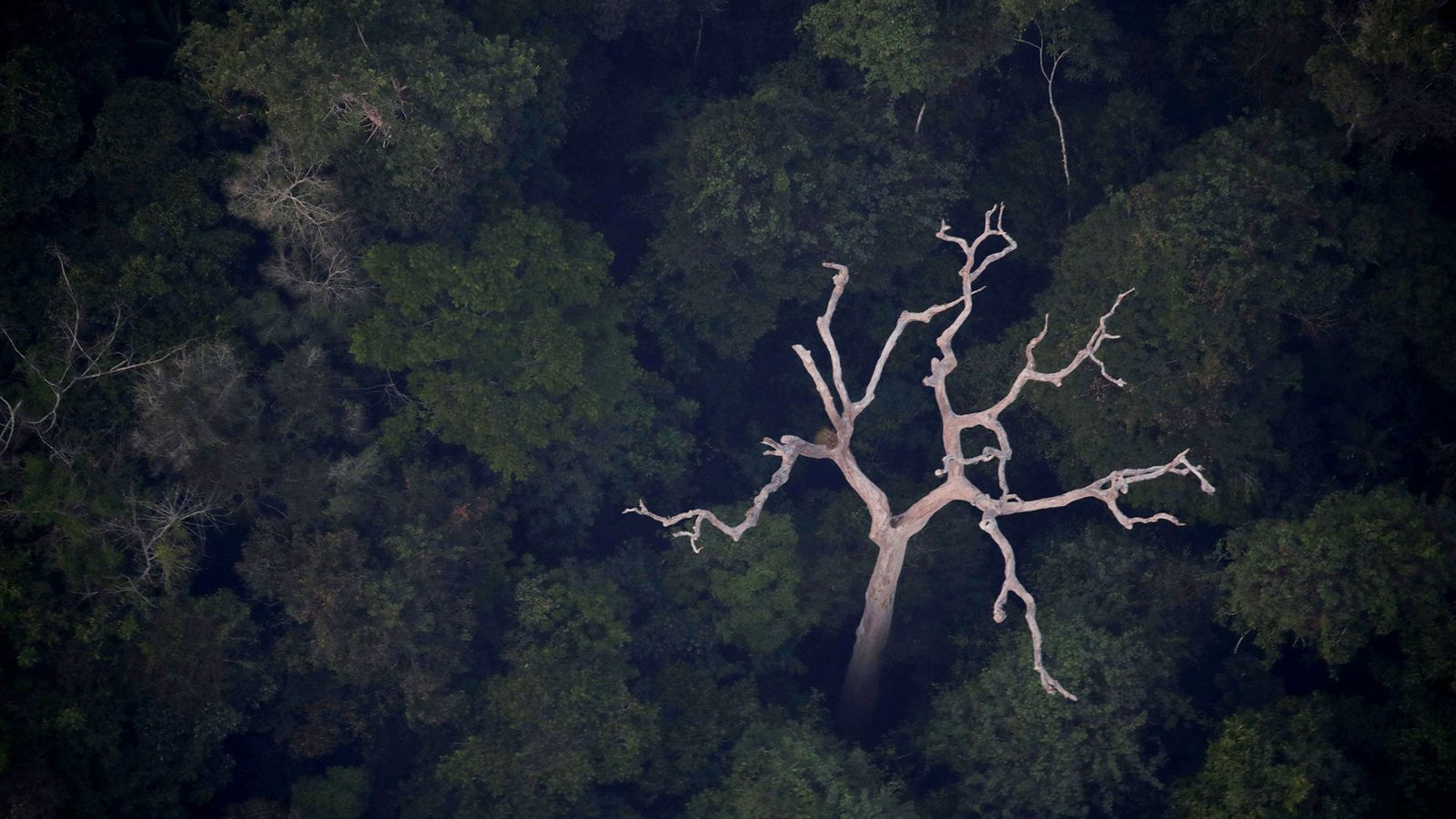 An aerial view of the Amazon near Porto Velho, Rondonia State, Brazil, on August 21, 2019.