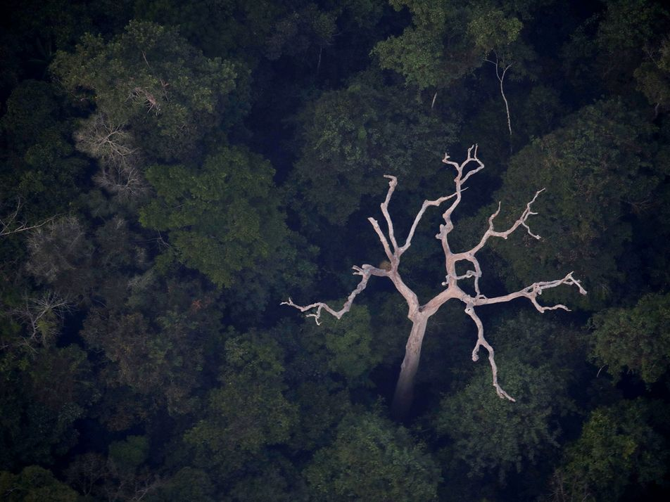 Bad science? Why the Amazon doesn't really produce 20% of the world's oxygen