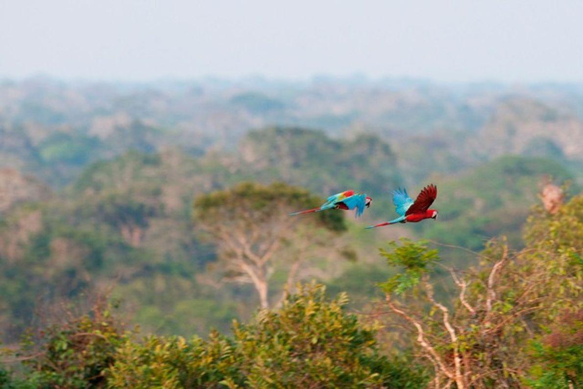 Amazon: Treading softly in Peru