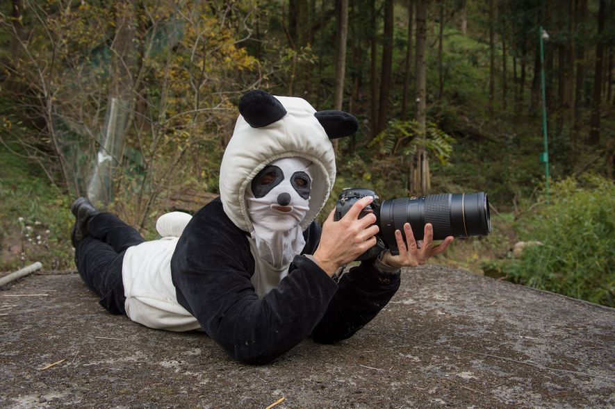 Ami Vitale donned a special disguise when photographing pandas at the Hetaoping Wolong Panda Center. Pandas being trained to live in the wild mustn't be used to seeing humans, including photographers.