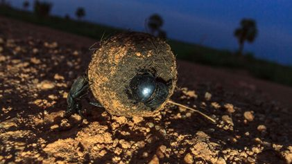From beetles to seals, these animals navigate by the stars