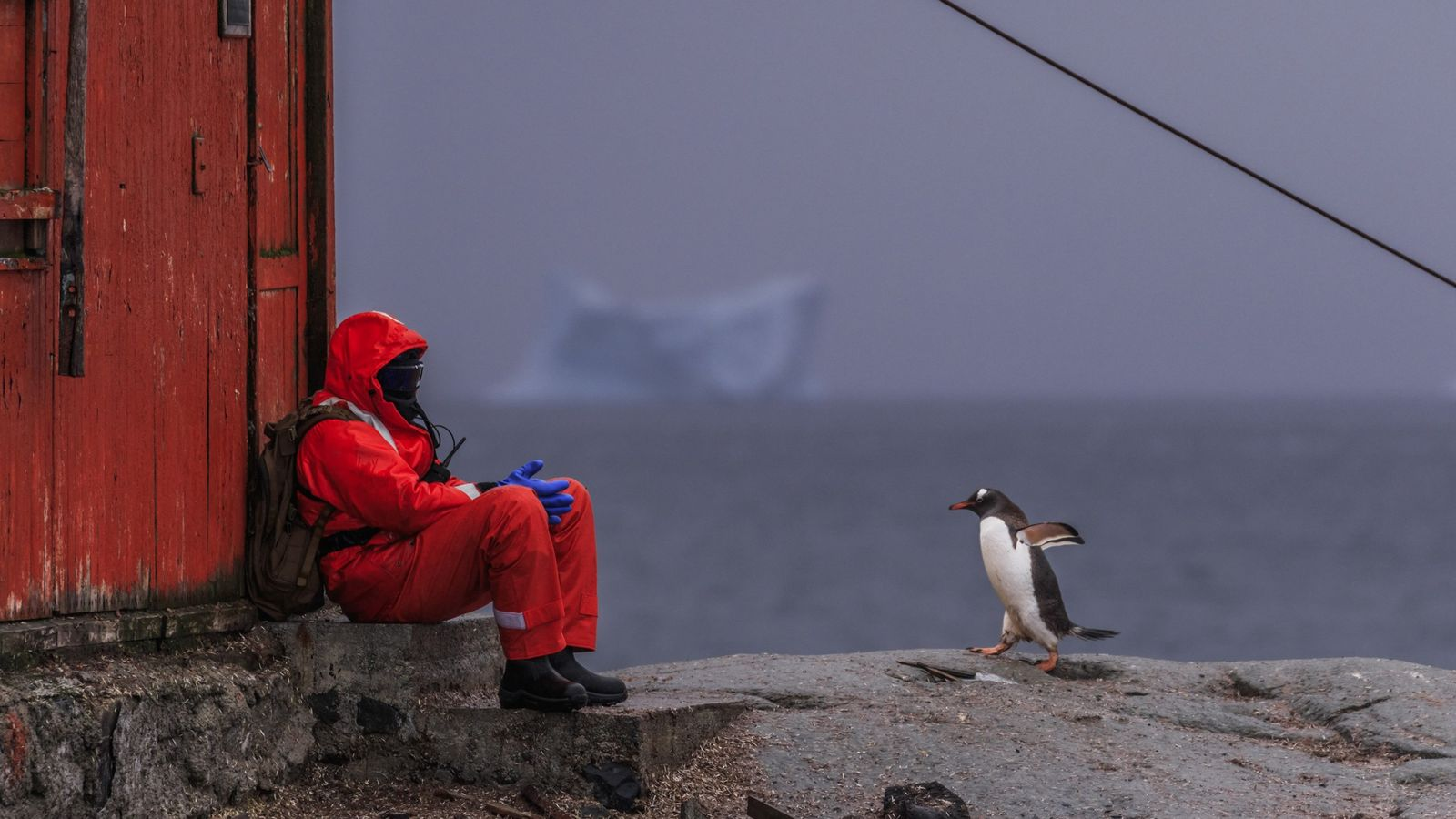 A person sits near a colony of gentoo penguins, Pygoscelis papua, next to an old research ...
