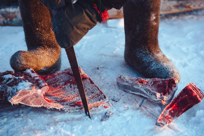 A Dolgan man in western Yakutia cuts frozen reindeer meat before preparing a meal. Other indigenous ...