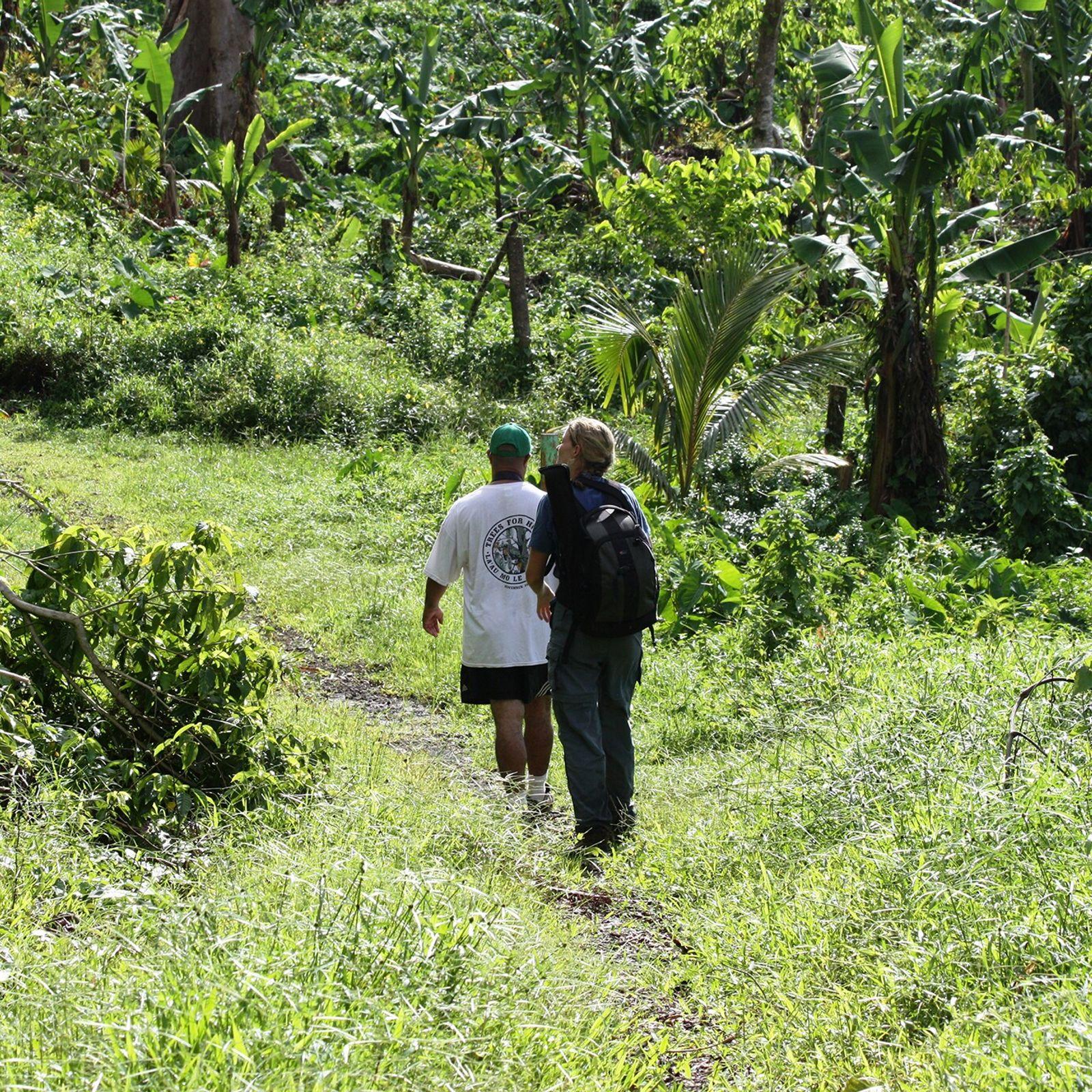 Trekking in Samoa