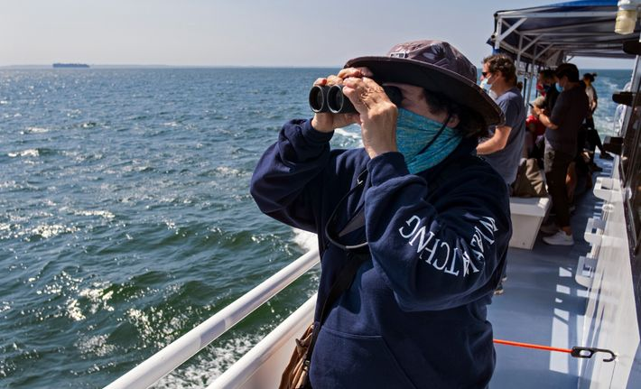 Naturalist Celia Ackerman keeps an eye out for whales on a cruise off the New York ...