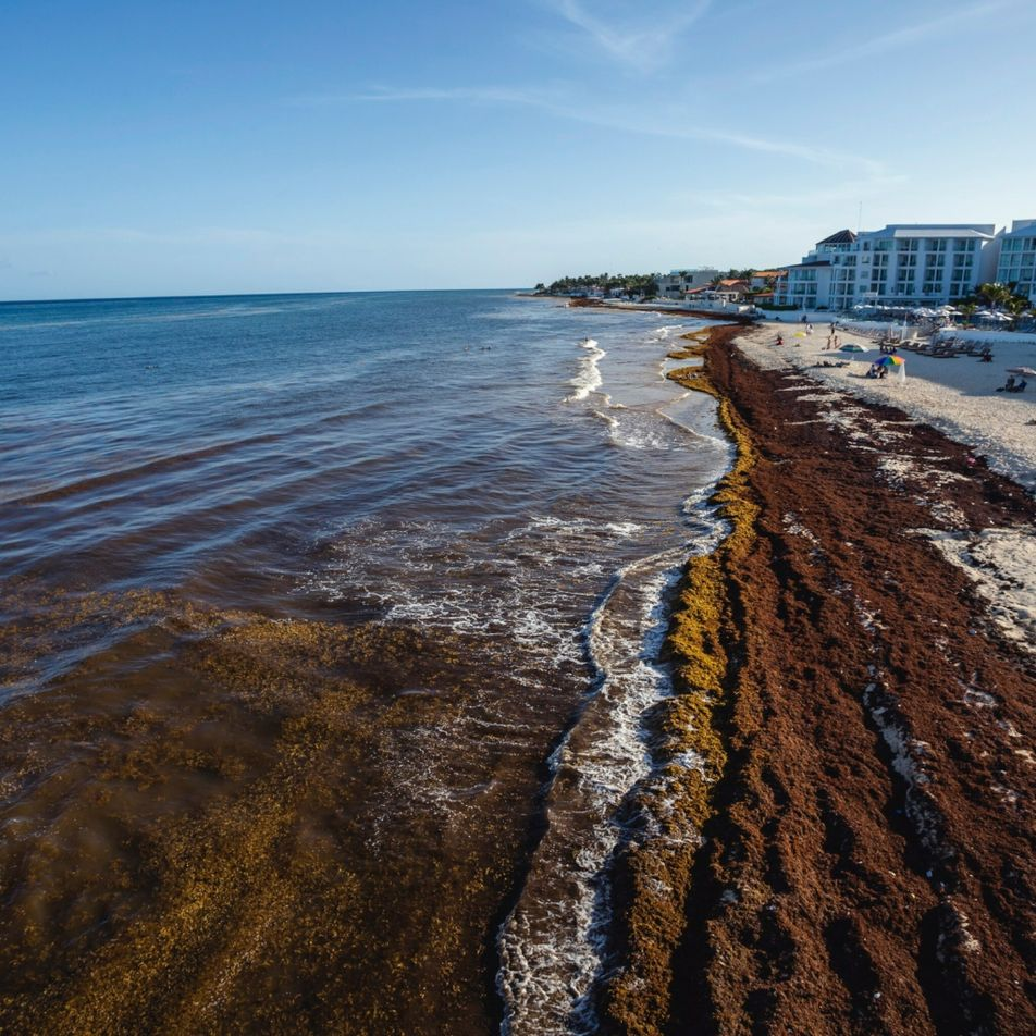 Can science solve the seaweed problem on Mexican beaches?