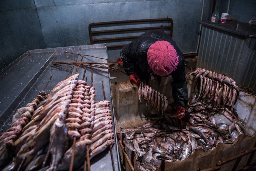 A worker prepares fish for smoking.