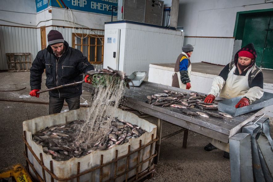 Workers process fish at a plant in Aralsk, Kazakhstan.