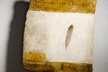 This exquisitely preserved 150-million-year-old feather, the first ever discovered, was found in a limestone quarry in ...
