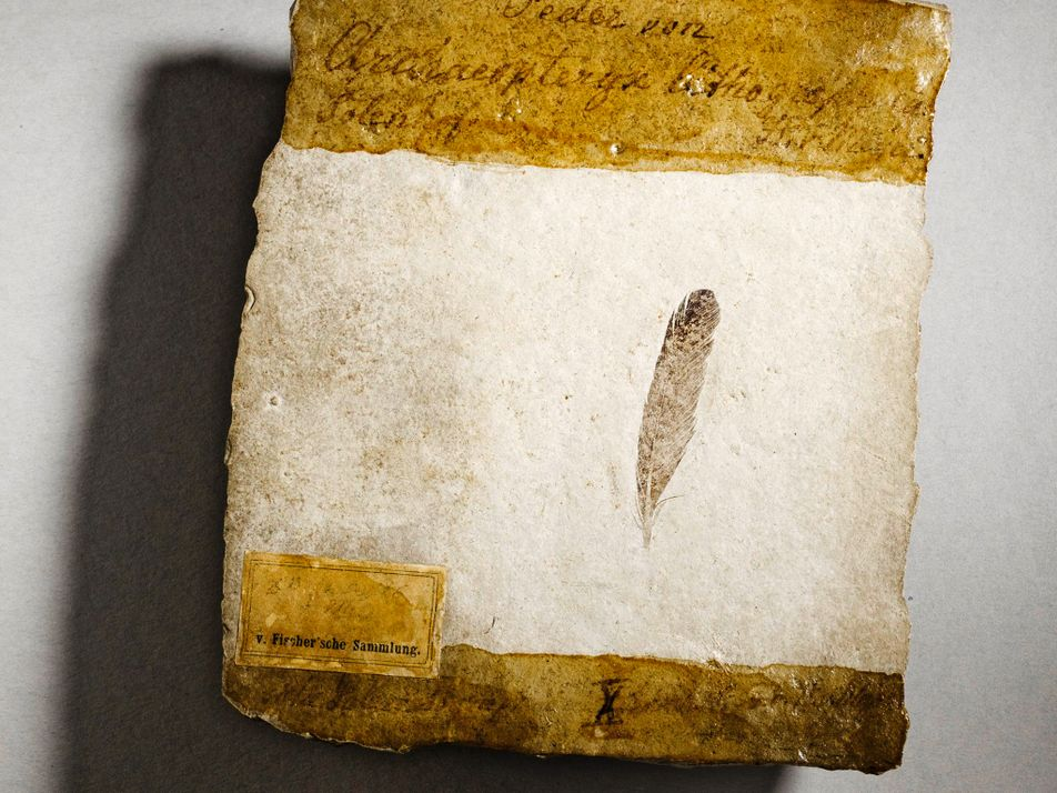 The first known dinosaur feather inspired decades of dispute. Here's why.