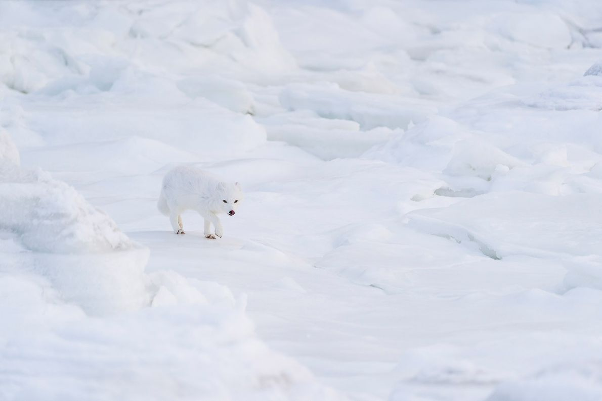 Lau won grand prize and a trip with National Geographic Expeditions to Churchill, Manitoba, famous for ...