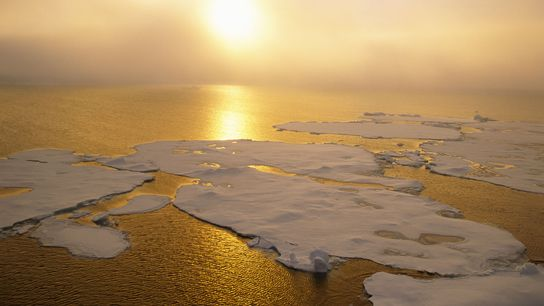 Arctic ice is melting rapidly, creating more open water. But scientists know little about what fish ...