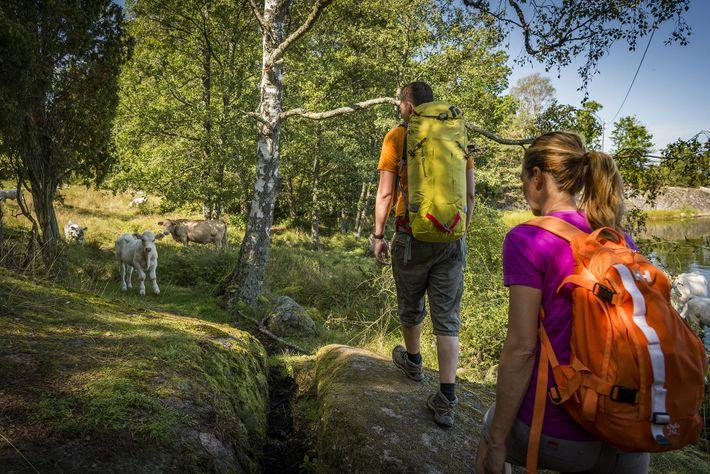 The long-distance Blekingeleden Trail