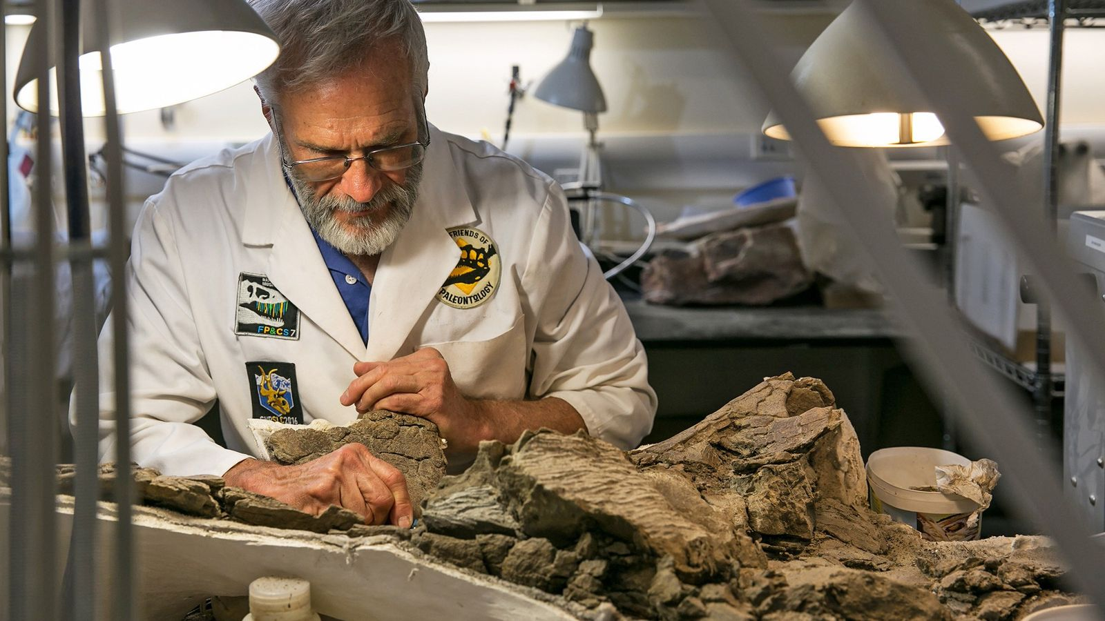 Randy Johnson, a paleo volunteer at the Natural History Museum of Utah, carefully prepares a fossil ...