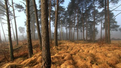 Visit the real-life forests that inspired these famous books