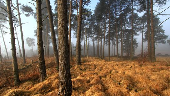 Ashdown Forest, England, inspired Winnie-the-Pooh's friendly Hundred Acre Wood. Visitors can try out nature journaling or ...