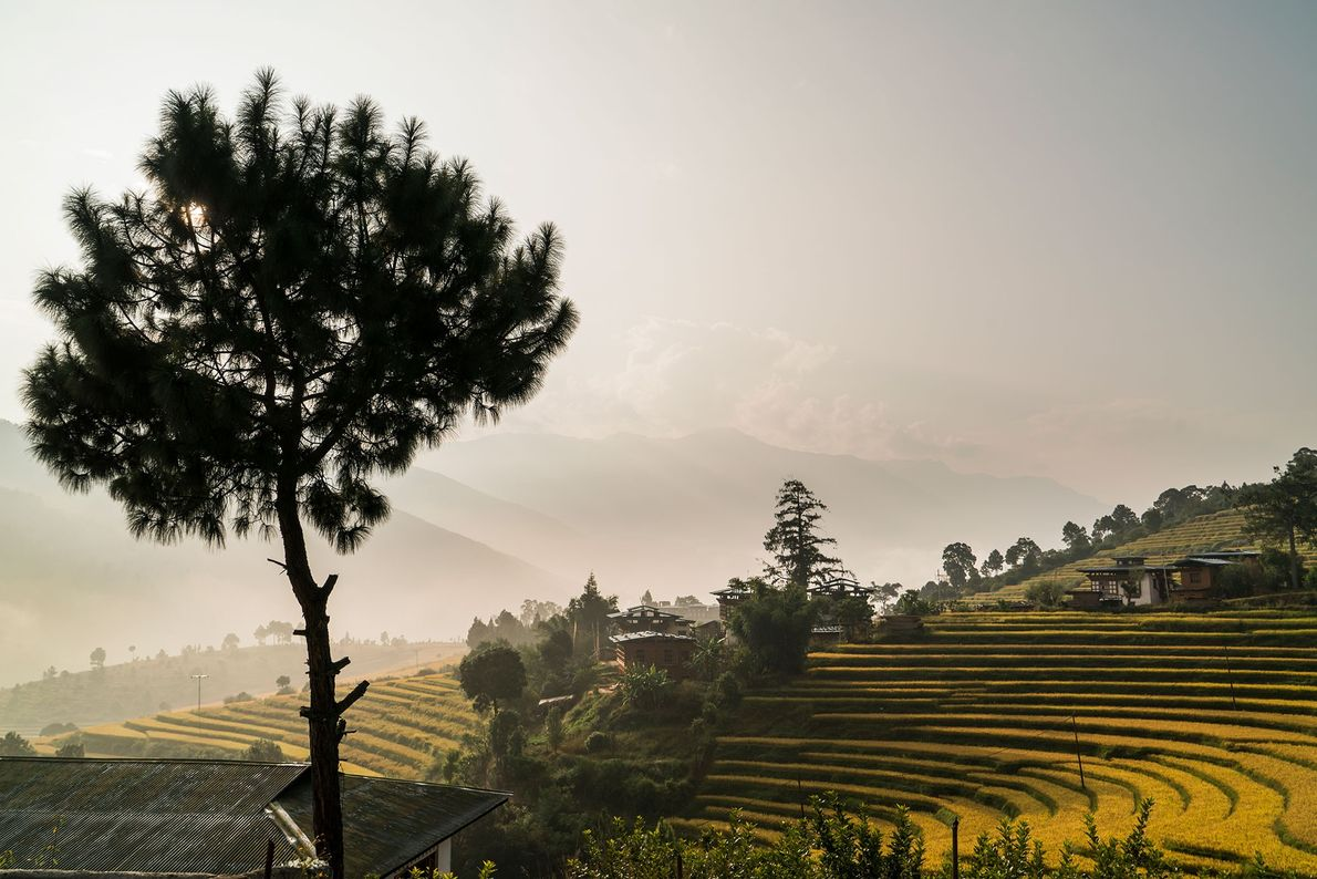 A country whose first highway was constructed only in the 1960s, Bhutan is an old culture ...
