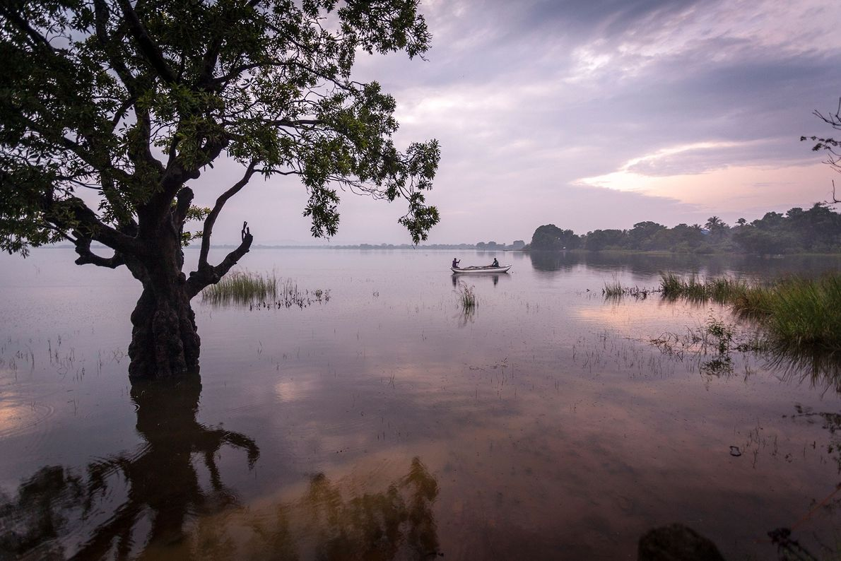 """Over 11 days on a """"Sri Lanka Wildlife Safari"""" with Natural Habitat Adventures, you're bound to ..."""