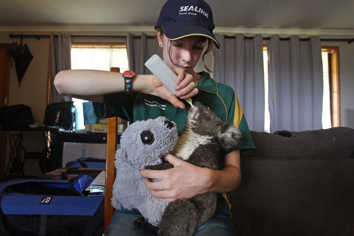 Volunteer Minka Macaule, 14, feeds an injured koala joey at the Kangaroo Island Wildlife Park in ...