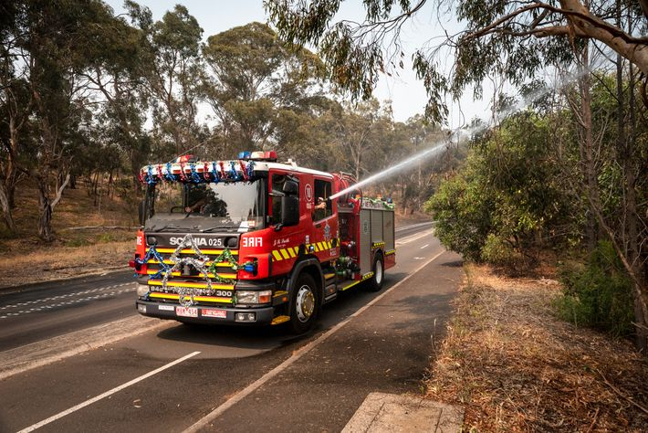 Firefighters from Melbourne's Metropolitan Fire Brigade spray water on the bats clumping on tree trunks in ...