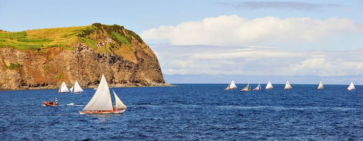 There are 24 species of whale in the Azores, a quarter of the world's population.