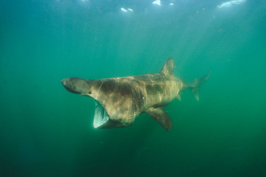 EXPLORE THE DIVERSE WORLD OF SHARKS