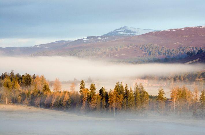 Morning mist at Mar Lodge Estate, Cairngorms National Park, Scotland.