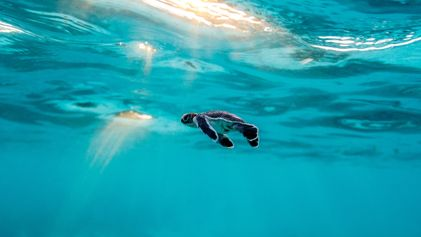 Where to go on Holiday with Hatching Baby Turtles