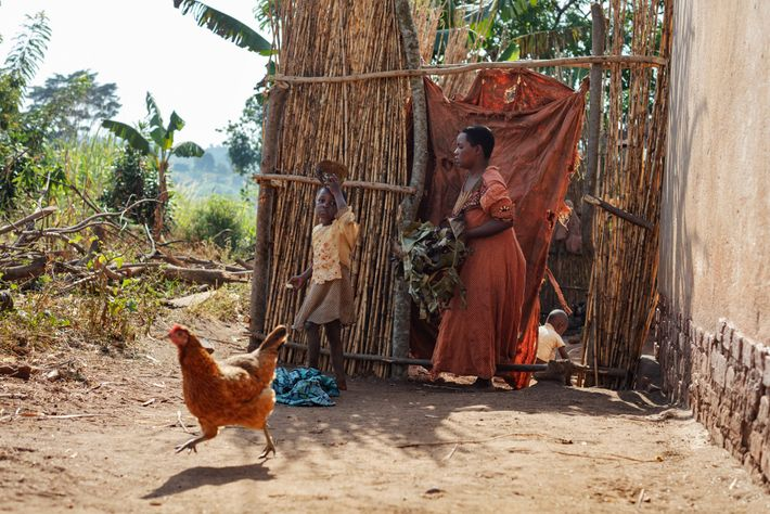 Before surrendering their house, the Sematas built a simple bamboo fence for protection around their backyard ...