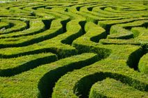 The hedge maze at Longleat in Wiltshire, is the largest in Britain. Comprising 16,000 English yew ...
